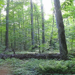 a general model of forest ecosystem processes for regional applications
